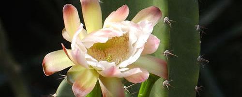 cactus-salto-encantado